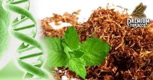 Ein wirksames Mittel gegen AIDS entdeckt dank der Tabak