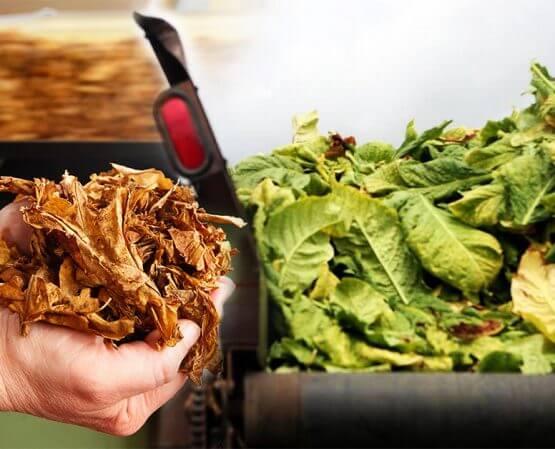 premium-tobacco