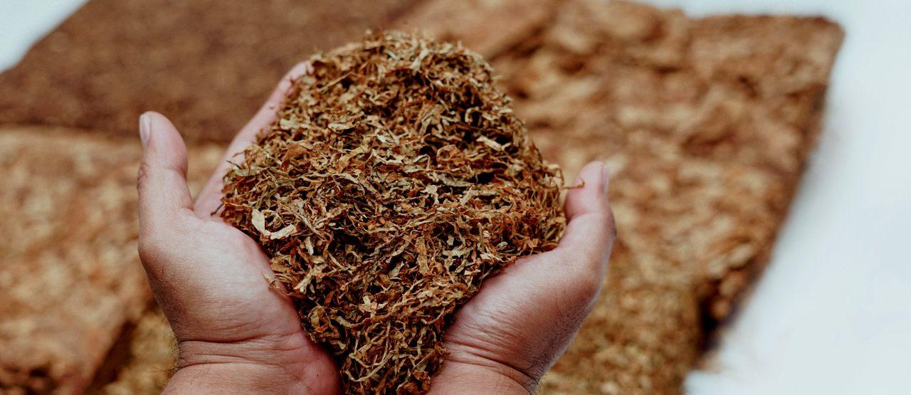 Tabak - wo gibt es ihn am häufigsten
